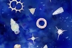 放散虫座 Constellation of radiolarias
